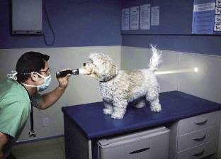 الصحة الإنجابية تبدأ من عيادة الطب البيطرى: آه يا كلبى