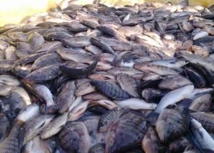مصدرو الأسماك يناشدون الحكومة حل مشكلة التصدير مع السعودية
