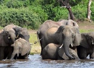 """فيديو.. غرق 6 أفيال حاولت إنقاذ """"فيل رضيع"""""""