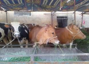 """""""الزراعة"""" ترد على شائعة انتشار فيروس الجلد العقدي بين المواشي في سوهاج"""