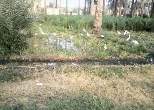 نائب: مصر ستخسر نصف رقعتها الزراعية لو استمر البناء على المساحات الخضراء