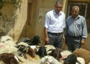 مدير زراعة البحر الأحمر يتفقد منافذ بيع خراف العيد