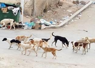 كلب ضال يعقر 3 أطفال في السنبلاوين بالدقهلية