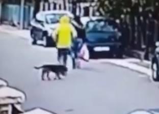 بالفيديو| لحظة إنقاذ كلب ضال لفتاة.. أجبر الرجل على الفرار