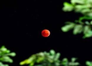 القمر الدموي يطل على الأرض تزامنا مع ظاهرة فلكية نادرة