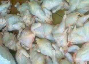 ضبط 400 كيلوجرام دجاج وكبد فاسد في سوهاج