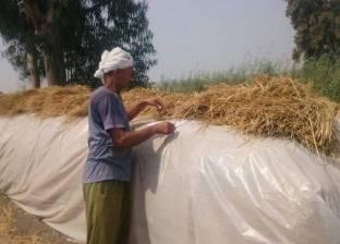 """""""شؤون البيئة بوسط الدلتا"""": 72 ألف طن أعلاف وسماد من قش الأرز"""