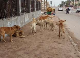 المغرب تمنع قتل كلاب الشوارع وتستعين بالتطعيم ضد السعار