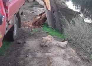 """الرياح تتسبب في سقوط 3 أشجار """"كازورين"""" بحي العامرية ثان غرب الإسكندرية"""