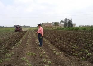 زراعة 97 ألف فدان بمحصول القطن في كفر الشيخ