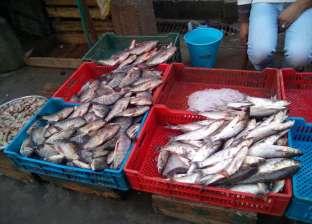 ضبط 230  كيلو سمك فاسد في دمياط