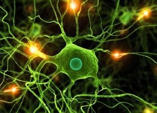 مادة كيميائية جعلت من الإنسان أذكى الكائنات الحية.. تعرف عليها