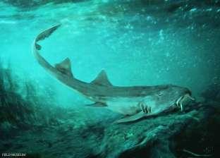 """علماء يعثرون على بقايا سمكة """"قرش"""" ترجع لما قبل التاريخ في نهر بأمريكا"""