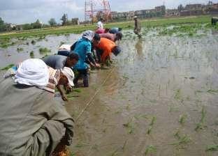 مزارعون يواجهون عطش محاصيلهم بشتلات الجفاف: توفر المياه وتزيد الإنتاج