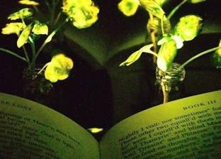 بالفيديو| العلماء ينجحون في تطوير نباتات مضيئة