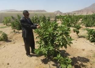 """وفد سوداني يبحث سبل التعاون مع بنكي """"التنمية"""" و""""الائتمان الزراعي"""""""