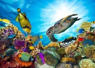 6 مخاطر تهدد الحياة البرية في اليوم العالمي لها