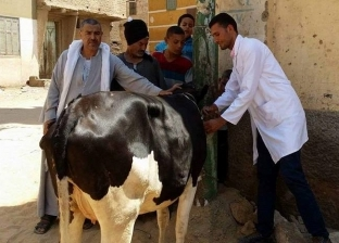 تحصين نحو 92 ألف حيوان ضد مرض الحمى القلاعية بالقليوبية