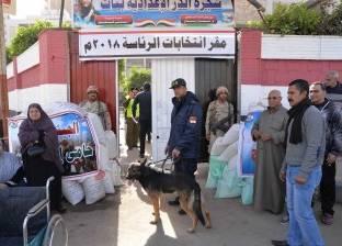 الكلاب البوليسية تنشط محيط اللجان بالمنصورة