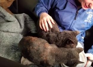 """""""لسة بخير"""".. شاب في مهمة إنسانية: أنقذ حيوانات من حرائق كاليفورنيا"""