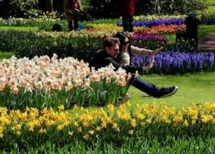 """""""رومانسية الزهور"""" تأسر القلوب في """"كويكنهوف"""" الهولندية"""