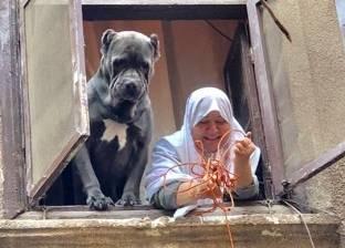 """مصور """"كلب الدرب الأحمر"""": أعيش في مصر منذ 20 عاما.. واللقطة طريفة"""