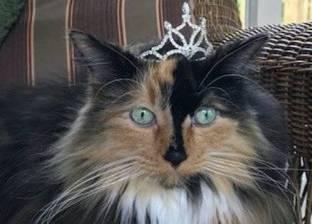 انتخاب قطة كعمدة لبلدية أمريكية بعد منافسة مع 13 كلبا وطاووس وعنزة