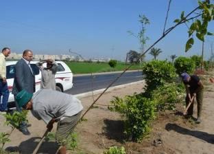 بالصور| محافظ كفر الشيخ يوجه بزيادة المسطحات الخضراء ونباتات الزينة