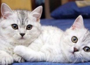 خصام أم سرقة.. تفسير ظهور القطط في المنام