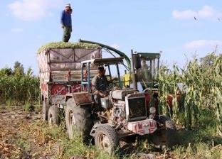 «السيلاج».. علف حيوانى جديد يدمر محصول الذرة