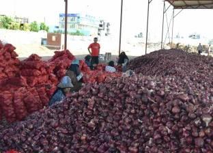 السعودية تحظر «البصل المصري».. و«الزراعة»: لم يصلنا إخطار