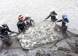 ارتفاع أسعار بيع السمك في سوق الجملة جنيها واحدا