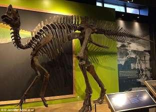 ديناصور غير معروف للبيع بمليوني دولار