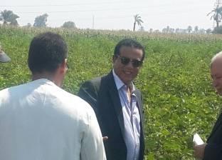 """""""زراعة كفر الشيخ"""" تنظم يوما حقليا للتوعية بمحصول """"الذرة الشامية"""""""