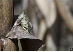 """""""البنتاجون"""" يخطط لتكوين جيش حشرات لنشر فيروسات.. وقلق في المجتع العلمي"""