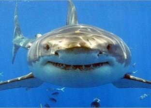 خلال 24 ساعة.. أسماك القرش تهاجم 3 أشخاص في أحد الشواطئ