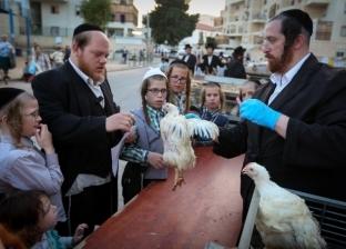 """""""تذبح الدجاجة مقابل تكفير الذنوب"""".. تعرف على تقليد """"الكاباروت"""" اليهودي"""