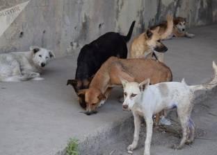 كلب يلتهم إصبع صاحبه وهو نائم.. وزوجته: «ستعاقب قبل الكلب»