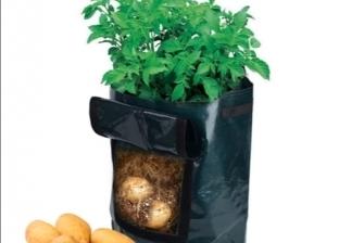 """لمواجهة """"جنون البطاطس"""".. متخصص يوضح طريقة زراعتها في المنزل"""