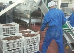 غدا.. 3 ندوات عن زراعة وتصدير التمور بالمهرجان الدولي الثالث في سيوة