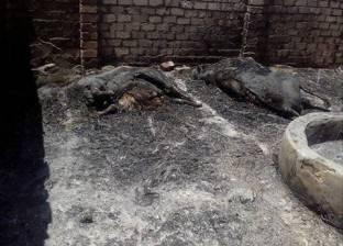 السيطرة على حريق شب بـ3 حظائر ماشية دون إصابات في الفيوم