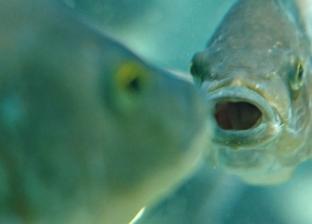 """بعد """"مليون سنة تأقلم"""".. الأسماك المكسيكة يمكنها علاج مرضى القلب"""