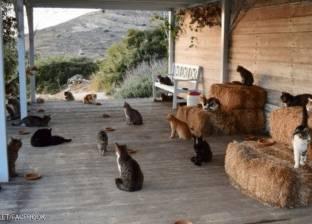 """آلاف الطلبات على وظيفة """"مربي قطط"""" بجزيرة يونانية خلابة"""