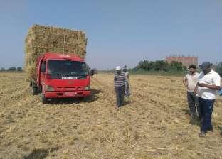 حصاد 216 ألف فدان أرز وذرة في كفر الشيخ