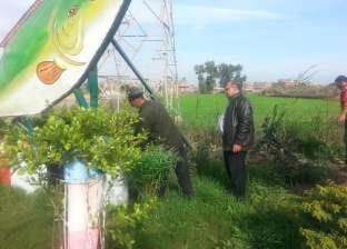 """بالصور  رئيس """"المطرية"""" بالدقهلية يتفقد أعمال التشجير بمدخل المدينة"""