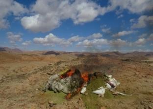 «الداخلية» تعلن إبادة 18 «مزرعة مخدرات» في جنوب سيناء