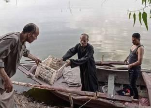 من نهر النيل لـ الشوي.. رحلة الأسماك في المنوفية