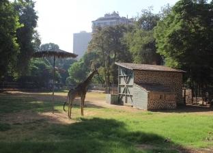 التذكرة بـ5 جنيه.. حديقة الحيوان تفتح أبوابها للزوار يوميا في إجازة منتصف العام