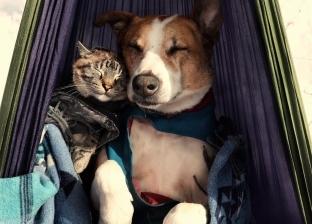 """لديهما مليون متابع.. قصة حب """"ملهمة"""" بين """"الكلبة هنري والقط بلو"""""""