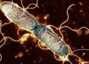 تفشي بكتيريا السالمونيلا في 41 ولاية أمريكية